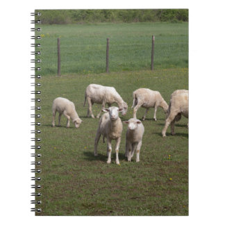 Flock av får anteckningsbok med spiral
