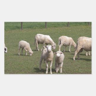 Flock av får rektangulärt klistermärke