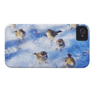 """Flock av gråsparv förbipasserandedomesticusen"""" på iPhone 4 skydd"""