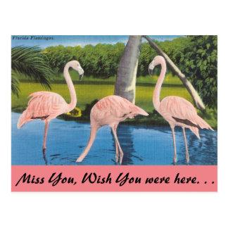 Florida Flamingos Vykort