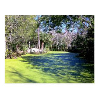 Florida flodvildmark vykort