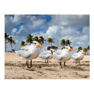 Florida - fyra tärnor på en strandvykort vykort