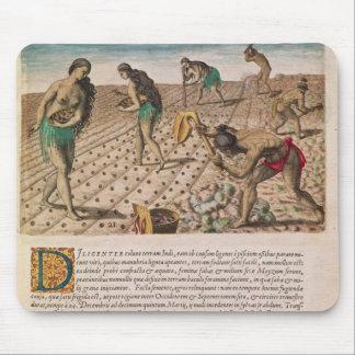 Florida indier som planterar maize musmatta