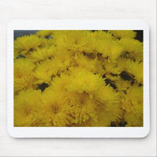 Flowers-003.JPG Musmatta