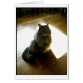 Fluffig katt i solskenhälsningkort hälsningskort