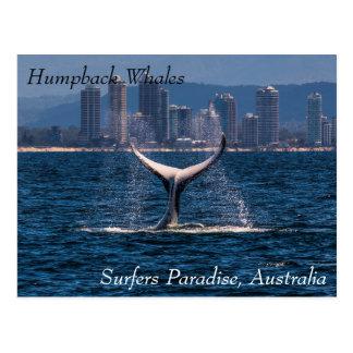 Fluke för puckelryggvalsvan av surfareparadis vykort