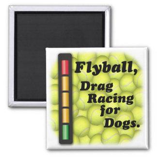Flyball är magneten för det friktionstävla-/hundky magnet