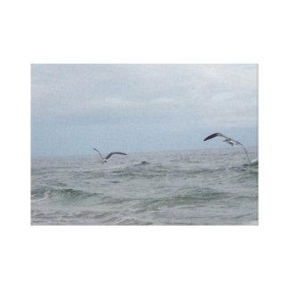 Flyga för Atlantic Ocean fåglar Canvastryck