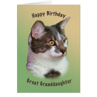 Födelsedag stor- sondotter, Guld--synad katt Hälsningskort