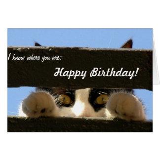Födelsedagkort: Detta katt ska fynd dig! Hälsningskort