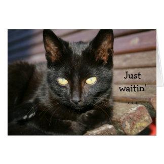 Födelsedagkort med den marvellous svart katten hälsningskort