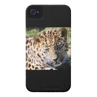 Fodral för blackberry bold för foto för Case-Mate iPhone 4 skydd