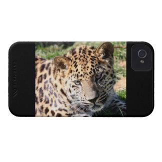 Fodral för blackberry bold för foto för Leopardung iPhone 4 Case