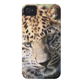 Fodral för blackberry bold för foto för Leopardung iPhone 4 Fodral