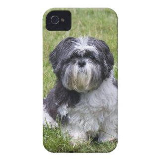Fodral för blackberry bold för foto för Shih Tzu h iPhone 4 Hud