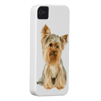 Fodral för blackberry bold för hund för Yorkshire  iPhone 4 Fodraler