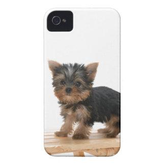 Fodral för blackberry bold för hund för Yorkshire  iPhone 4 Case-Mate Skal