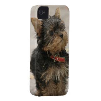 Fodral för blackberry bold för hund för Yorkshire iPhone 4 Case-Mate Fodral