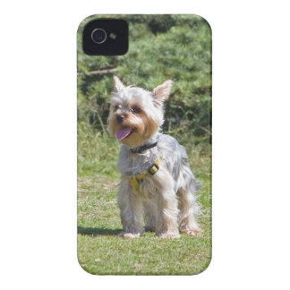 Fodral för blackberry bold för hund för Yorkshire  iPhone 4 Case-Mate Fodraler