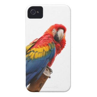 Fodral för blackberry bold för papegojafågel iPhone 4 skydd