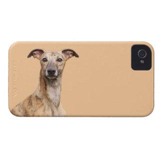 Fodral för blackberry bold för Whippet hundfoto iPhone 4 Skydd