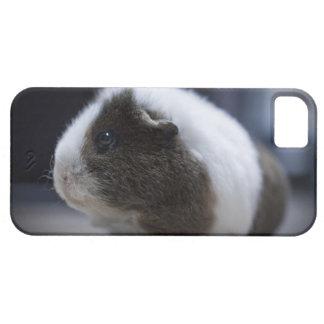 fodral för iPhone 5 med den gulliga försökskaninen iPhone 5 Fodraler