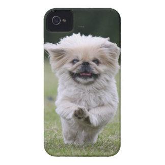 Fodral för Pekingese hundblackberry bold, gulligt iPhone 4 Case-Mate Cases