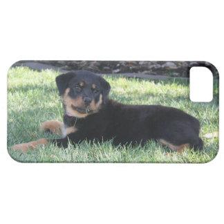 Fodral för Rottweiler valptelefon iPhone 5 Case-Mate Skydd