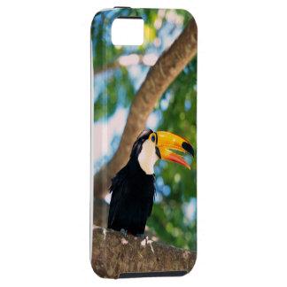 Fodral för Toucan fågeliPhone 5 iPhone 5 Fodraler