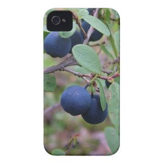 Fodral för vildbärblackberry bold iPhone 4 case