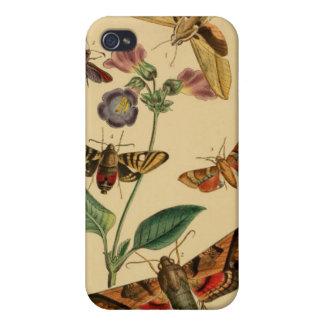 Fodral för vintagemalentomologi iPhone 4 cases