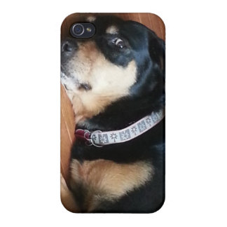 fodral Rottweiler för iPhone 5 iPhone 4 Fodral