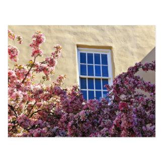 Fönster & blommar vykort