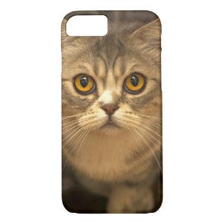 För Apple för kattungeKat-kattunge fodral iPhone 7