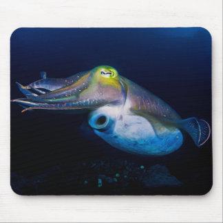 För barriärrevkorall för färgrik bläckfisk musmatta