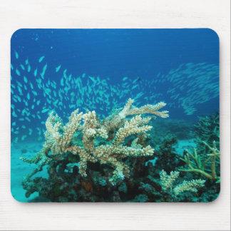 För barriärrevkorall för tropisk fisk underbart musmatta