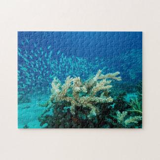 För barriärrevkorall för tropisk fisk underbart pussel