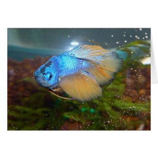 För Betta för blått och för guld Male fisk Hälsningskort
