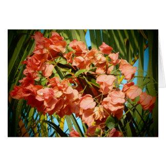 För blommaHawaii för Bougainvillea tropiskt kort h