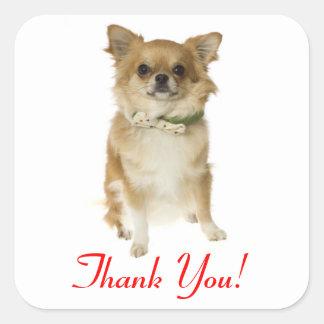 För Chihuahuahälsning för tack lång Haired Fyrkantigt Klistermärke