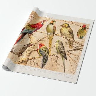 För Conure för vintagepapegojakakadua Cockatiel Presentpapper