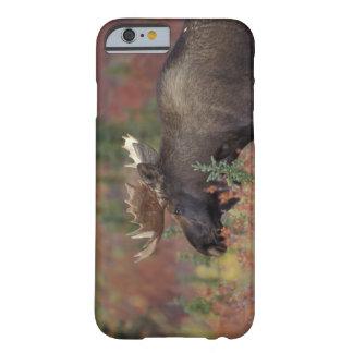 för Denali för 米国、 アラスカの のアメリカヘラジカ för tjur の国立公園の Barely There iPhone 6 Fodral