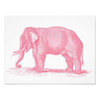 För elefant1800s för vintage rosa illustration för fototryck