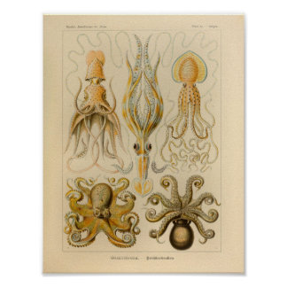 För Ernst Haeckel för vintagebläckfiskfärg tryck