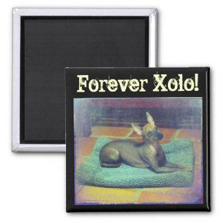 För evigt Xolo! Magnet