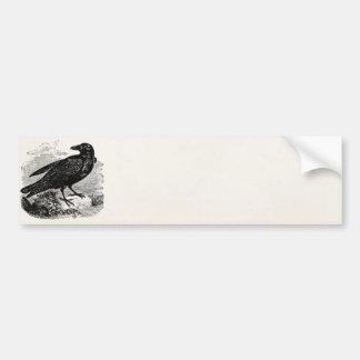 För fågelkråka för vintage korpsvarta svart fåglar bildekal