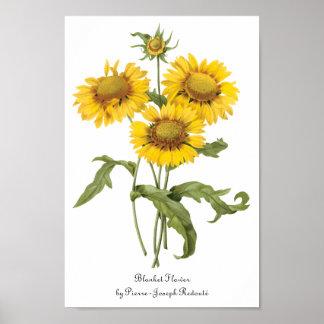 För filtblomma för vintage blom- solros vid poster