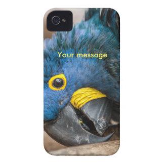 för fodralblått för iphone 4 papegoja för Macaw Case-Mate iPhone 4 Case