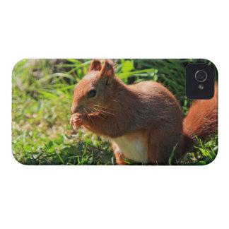 För fotoblackberry bold för ekorre rött gulligt iPhone 4 Case-Mate skal