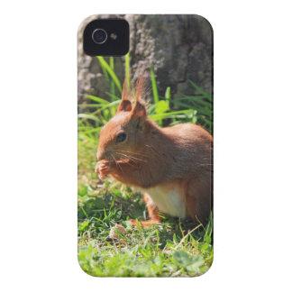 För fotoblackberry bold för ekorre rött gulligt iPhone 4 hud